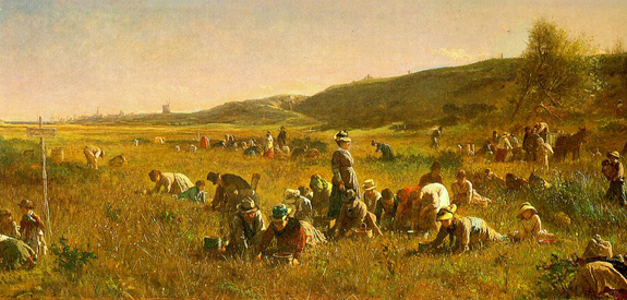 1880 Cranberry harvesting - www.WhalingCity.net